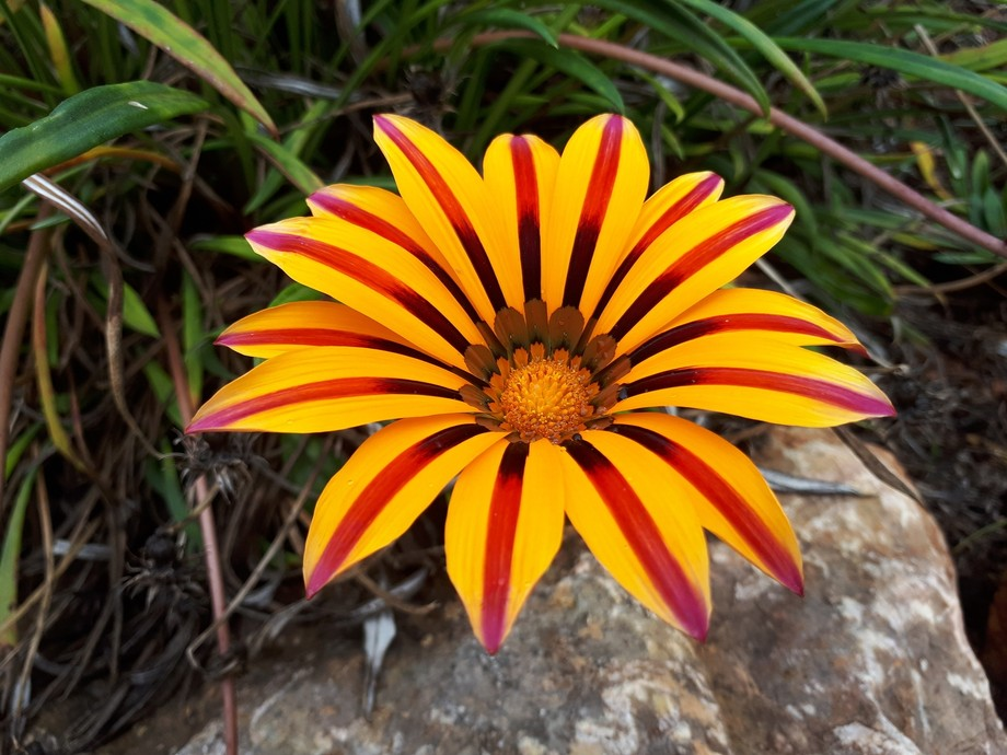 Beautiful sunny flower