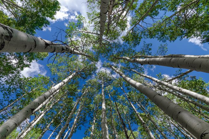 Reaching for the Sky by jamesharrisphoto - Tall Trees Photo Contest