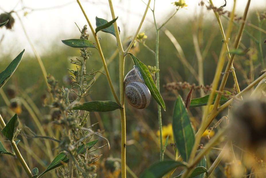 Nature preserve, Newport Beech, CA.