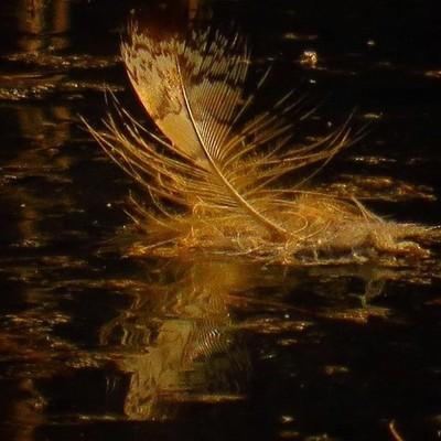 Wood Duck feather with reflection,morning light.  #trailsend #feather #woodduck #reflection #morninglight #wander #wetlands #woods #adk #newyorkstate #canon_photos #pocket_birds #got__greatshots #marvelouz_world #ig_birds #bd_birds #adirondackexplorer #ne