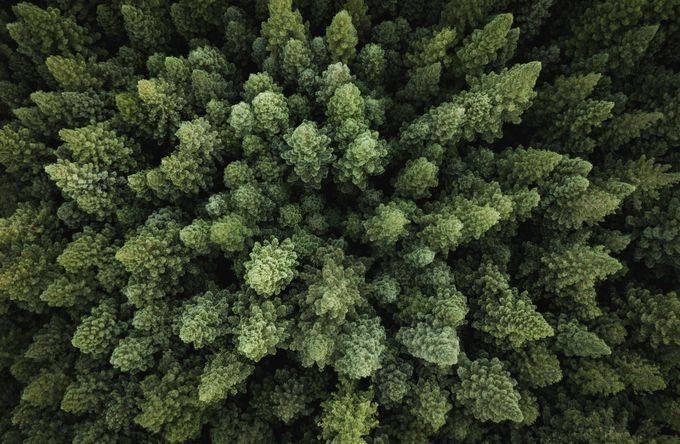 Tree Tops by HaydnDarePhotography - Fill The Frame Photo Contest