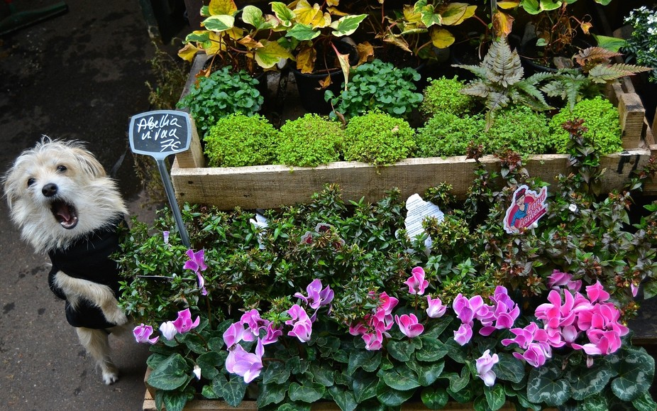Who could resist this winsome merchant at the Flower Market in Paris, hawking his cyclamens and a...