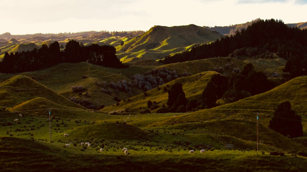 Looking out over the hills behind Raetihi, Pipiriki and the Whanganui River sit in the far distance