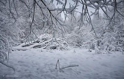 white shrub...