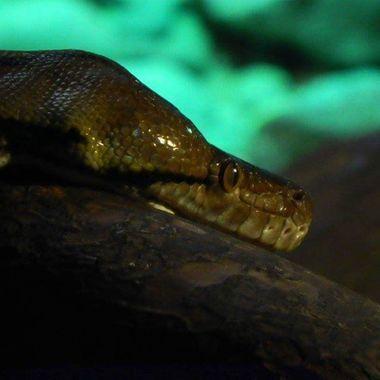 #snake #closeup #photography #photo #photgrapher #photograph