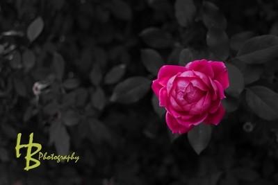 Rose Play 2