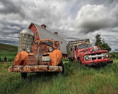 Two Old Farm Trucks