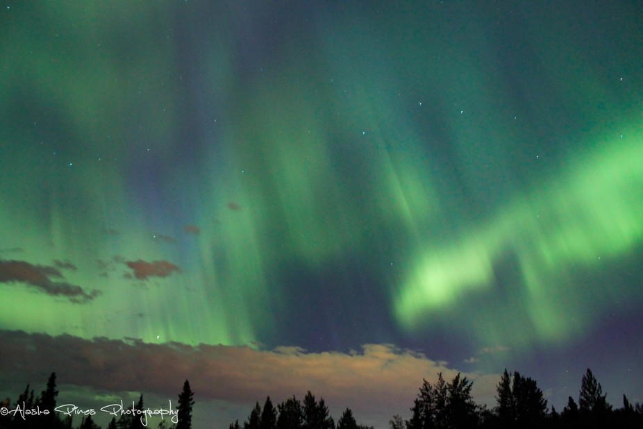 Brilliant aurora dancing in Bear Valley, Alaska