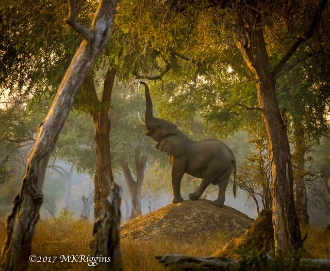 Elephant on a Mound by mkriggins - Big Mammals Photo Contest