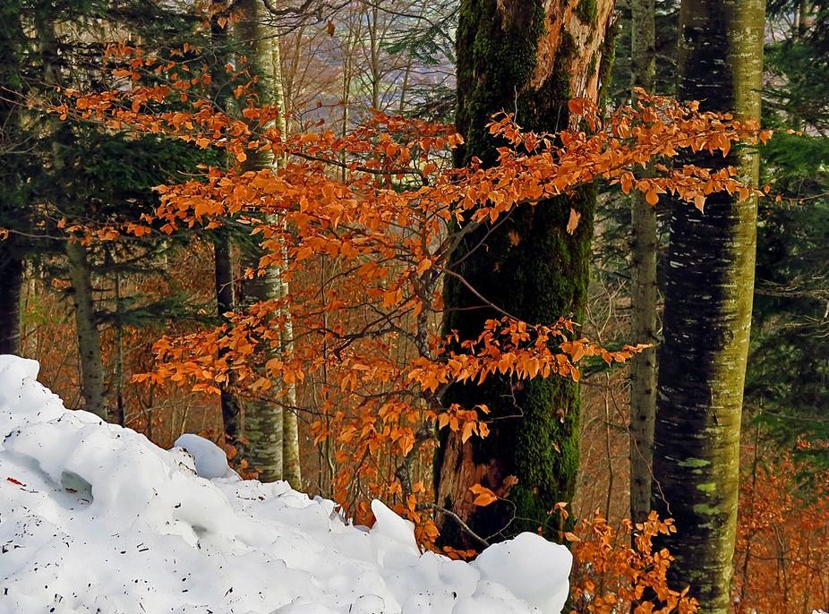Winter in Jura