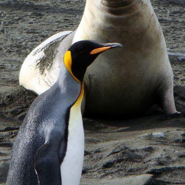Antarctica Island hopping!