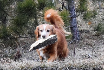 Ginger with wood