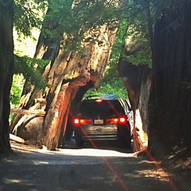 Road trip thru the redwoods!