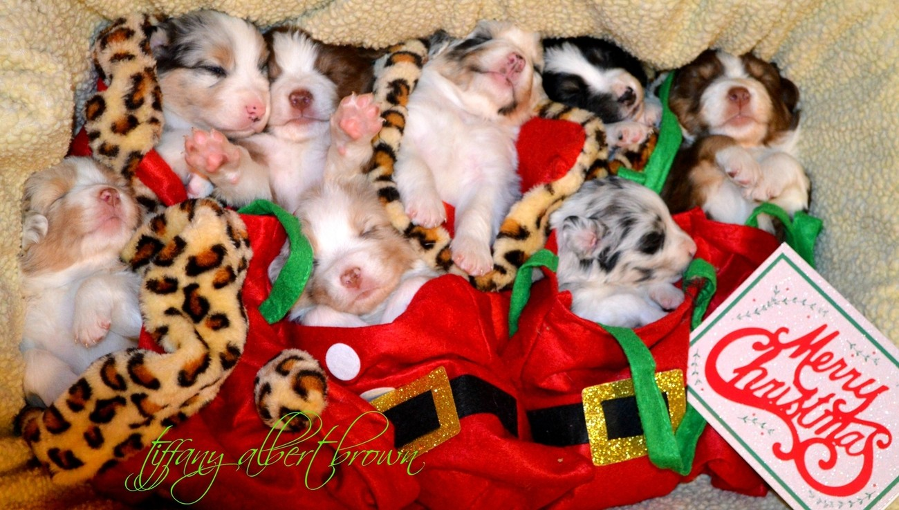 Puppy Love Christmas