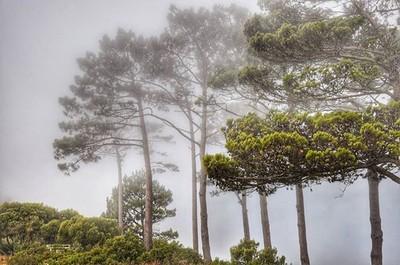 #misty #trees #eyeem #eyeemoninstagram #eyeemphoto #capetown #southafrica #g
