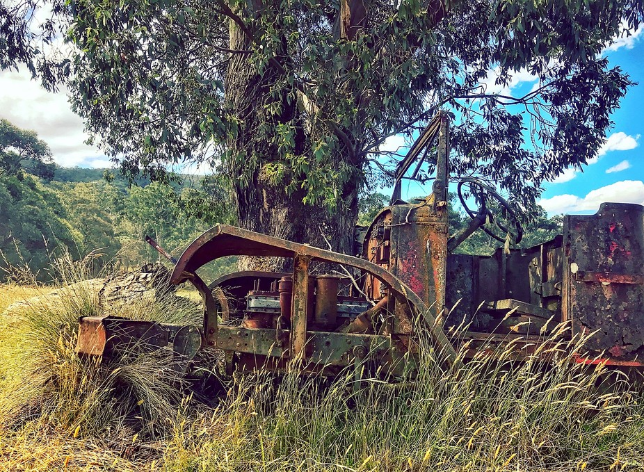 An old Ford tractor hidig in the overgrowth, old Dargo Road, Victoria. Australia