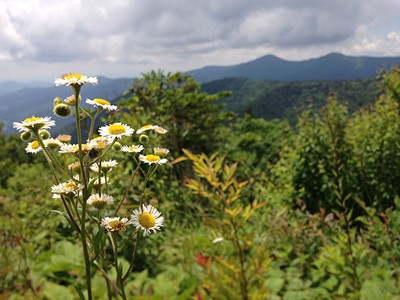 From the Flowers to the Mountains