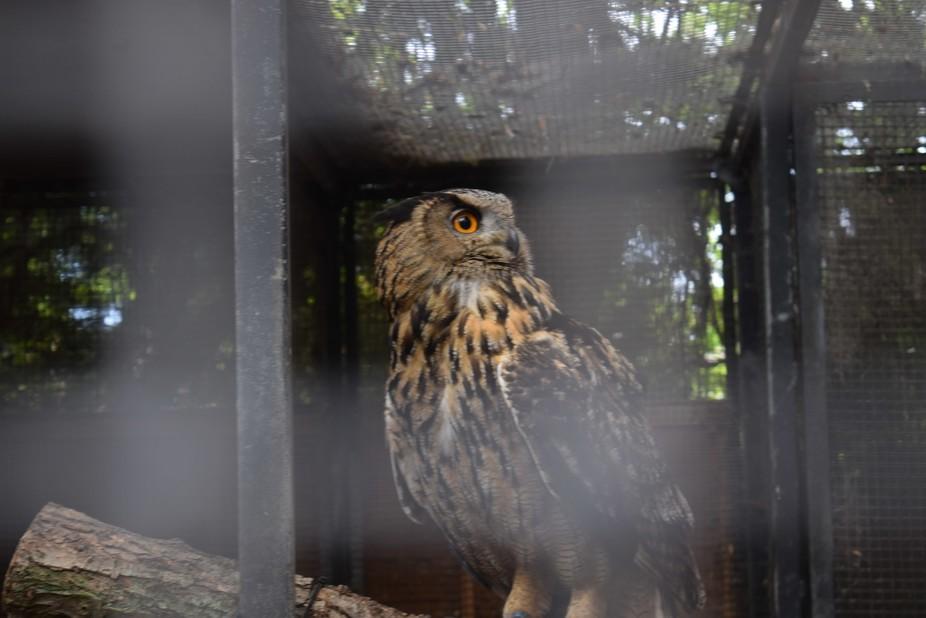 owl-Kirkleatham owl centre