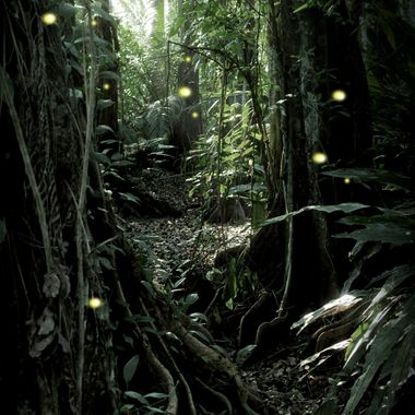 This is the first time I ever saw fireflies. As I walked through the jungle to the beach, I stopped in amazement and cried.