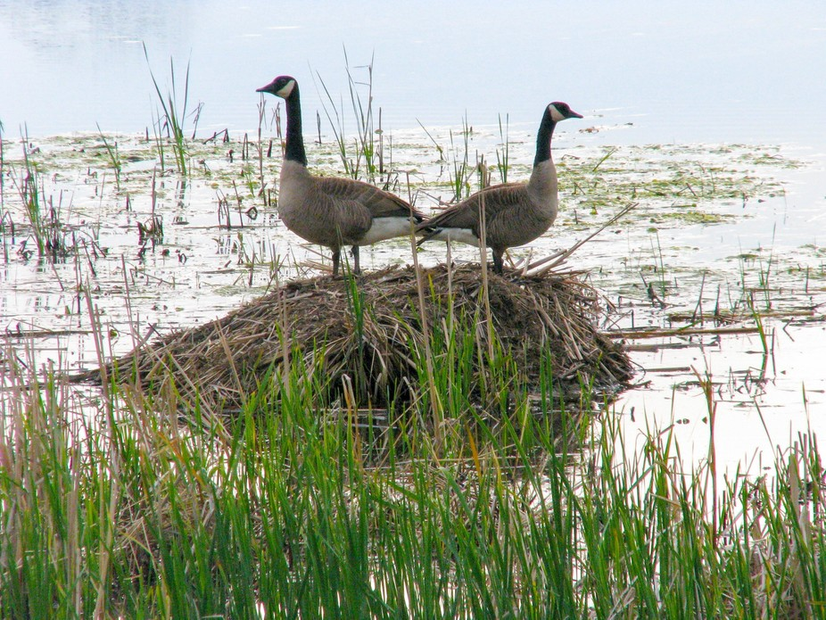 Six Mile Creek-Waunakee, WI; babies were nearby