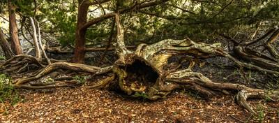 The  Tree Creature
