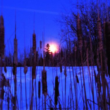 1-2-18 Caught the supermoon rising through the cattails at sunset Nikon Coolpix 6500