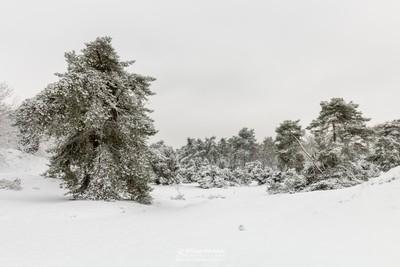 White Winter Boshuizerbergen