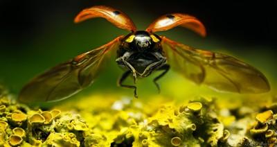 Ladybug Descent
