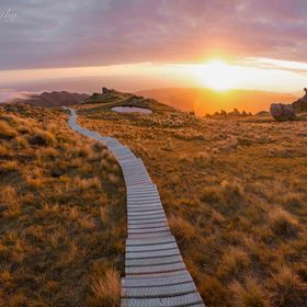 Sunset near the summit of the Humpridge Track, New Zealand.   The Humpridge Track is a three day, two night walk through a spectacular part of th...
