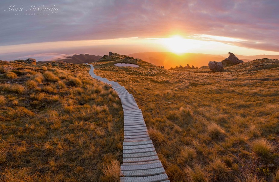Sunset near the summit of the Humpridge Track, New Zealand.   The Humpridge Track is a three day,...