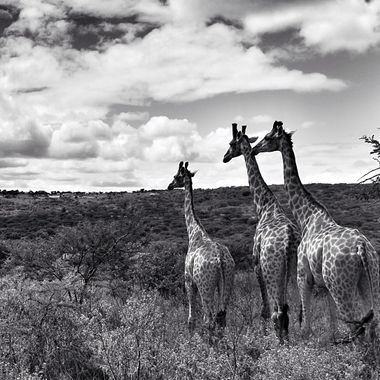 Serengeti, south africa!