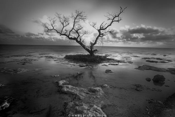Alone Tree by GPictoria - Black And White Landscapes Photo Contest