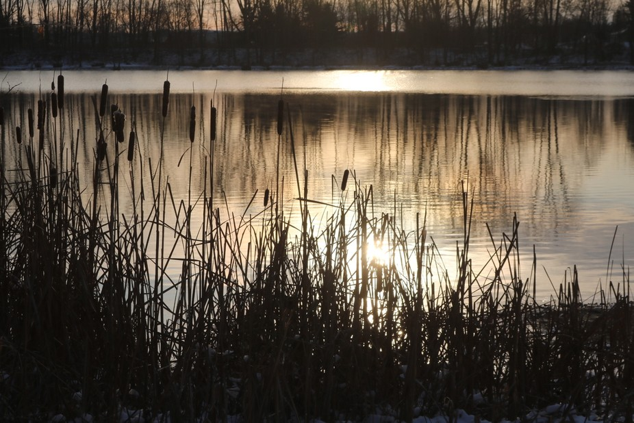Cattails and sunrise the day after Christmas