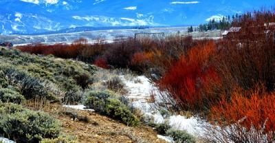 Bright Colors in winter