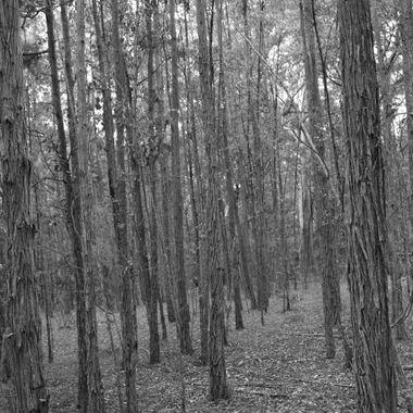 Trees B/W 1