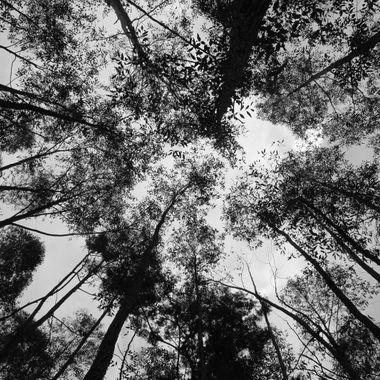 Trees B/W 2