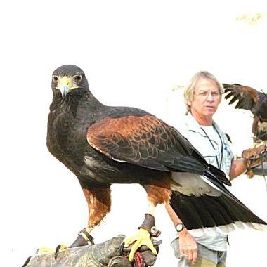 Hawk life!