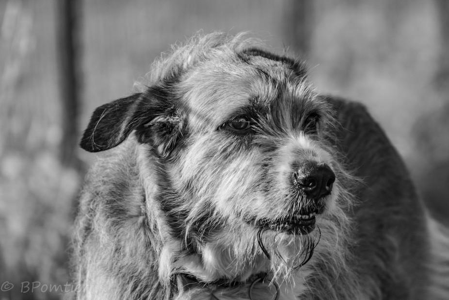 Maggie Wolfhound