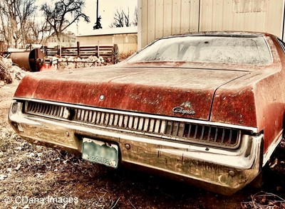 Classic Chrysler style: Newport Custom in the weeds, Boulder Colorado.