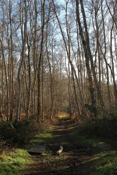 Holme fen walk