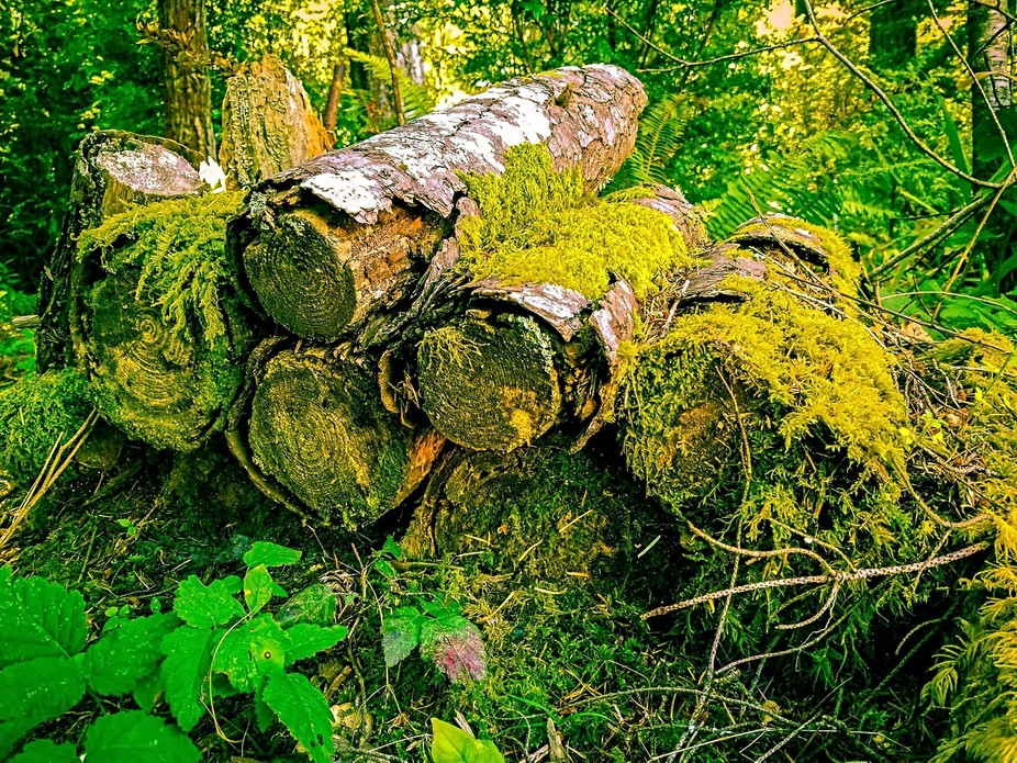 Logs in the woods