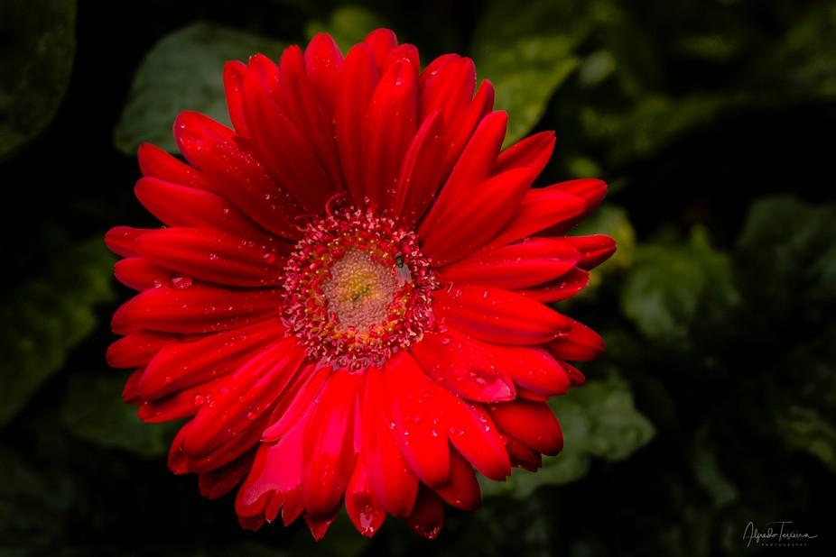 Single Flower...