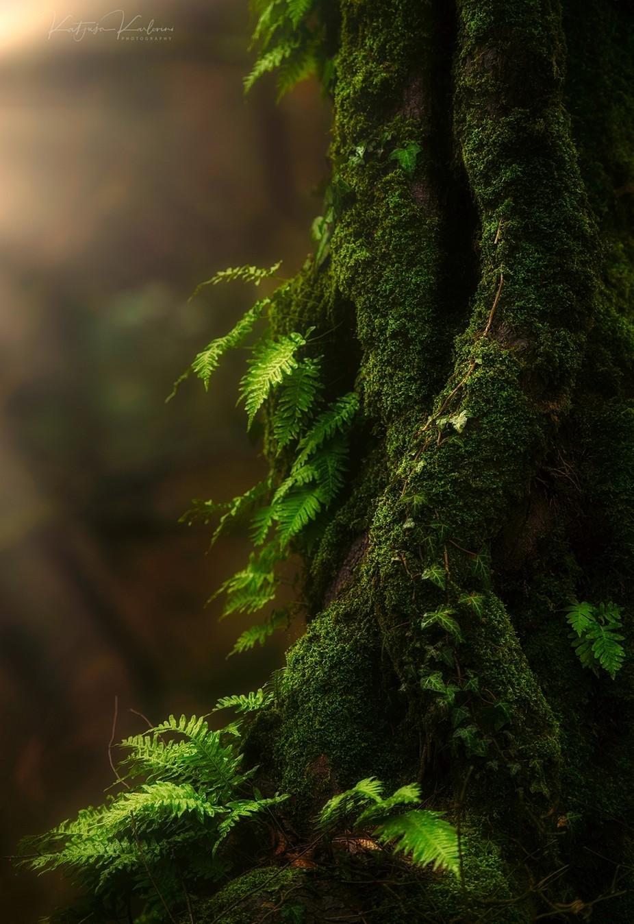 Shy by Katjusa_Karlovini - The Nature Lover Photo Contest