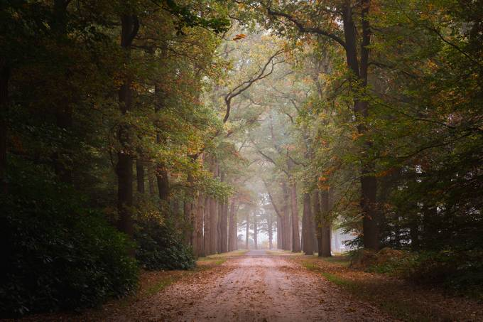 Autumn Lane by ronaldjansen - Image Of The Month Photo Contest Vol 29