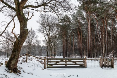 Gate Into The Winter Forest