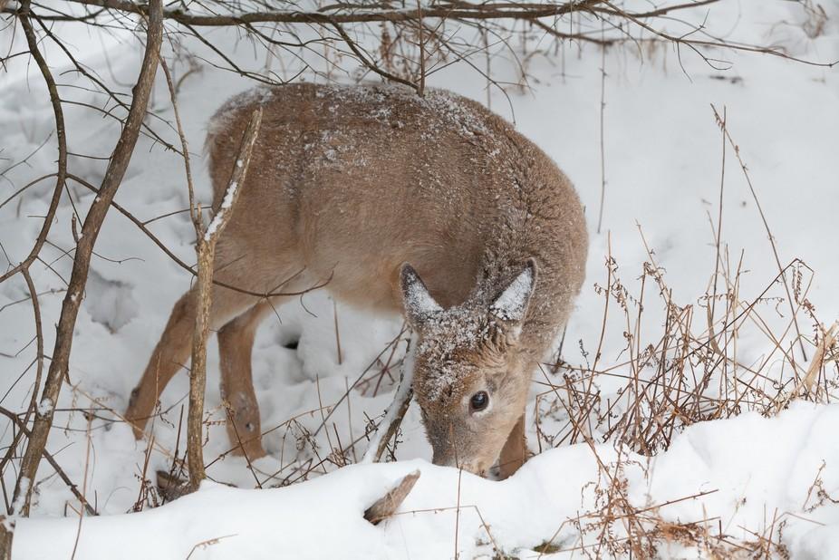 Picture taken in Parc Omega, Montebello, Quebec, Canada