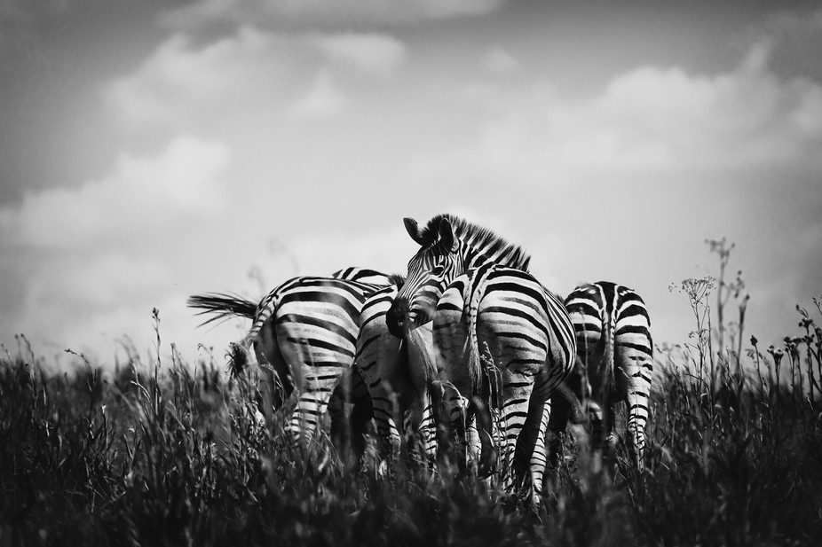 Just off the Highway to Pretoria lies Rietvlei...it's filled with amazing animals. The Z...