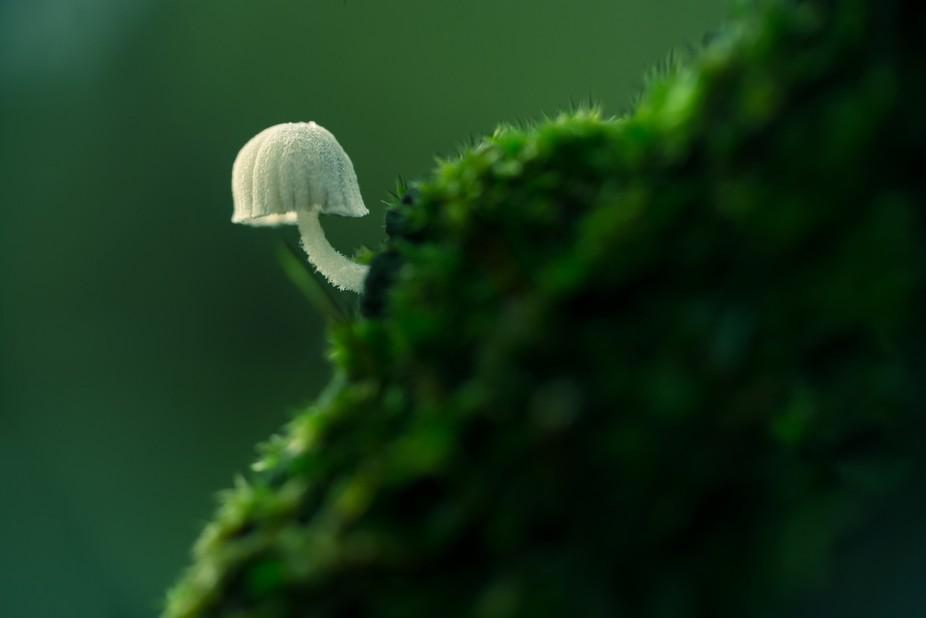 3 milimeters fungi over moss
