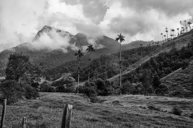 The Cocora valley is a valley in the department of Quindío (Colombia). It is located in the Central Cordillera of the Andean mountains. We were on a horse trip up the mountains to a place called Acaime.