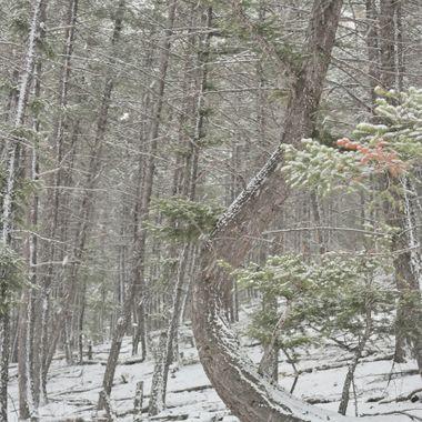 Bend Around the Snow
